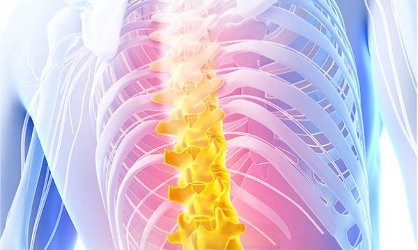 Explore CBD- The human backbone
